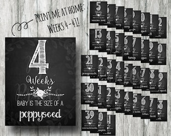 Black and White Printable Weekly Pregnancy Signs- Weeks 4-41 Chalkboard Countdown Prints- Instant Download Photo Props