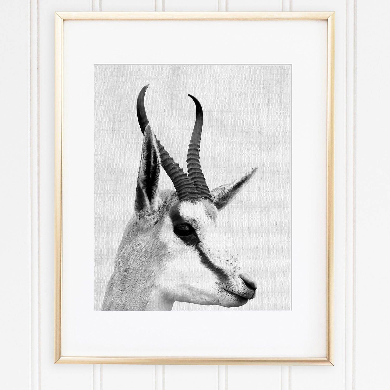 Antelope Head Print Antelope Wall Art Springbok Printable