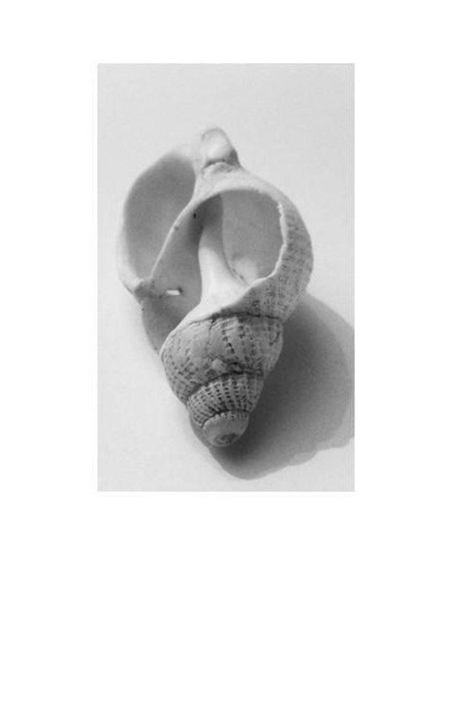 Sea shell art print a black and white art photo print for nautical home decor sea shell wall art a white spiral shell photo print