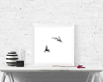 Print, wall print, art print, minimalist picture with white background, terns in flight, birds photography, 20 x 20 cm, 30 x 30 cm