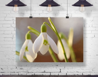 Green Heart Snowdrop Botanical poster Photography Blossom 40 x 30 cm