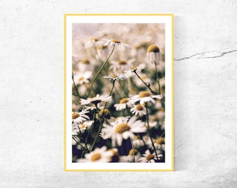 Blossoms flower Chamomile chamomile Summer poster photography home wall Art Decor 45 x 30 cm