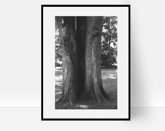 Baum, Baum Foto, Baumstumpf, Ast, Baumrinde, Baum Schwarz Und Weiß,  Skandinavisch, Baum Plakat, Baum Druckbare, Dekor, Druck Dekor