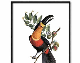Tropical Printable Wall Art, Bird Print (Digital Download Vintage,Toucan Art, Antique Home Wall Decor)
