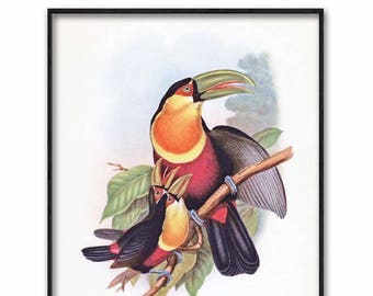 Toucan Art Instant Download (Jungle Home Decor, Printable Living Room Wall Art) --- Vintage Digital Bird Print