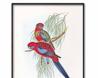 Parakeet Art Instant Download (Printable Red Home Decor, Instant Living Room Wall Art) --- Vintage Digital Bird Print