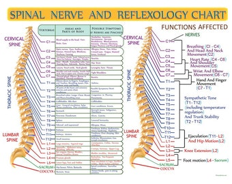 Spinal Nerve And Reflexology Infographic Print By Hearts For Love