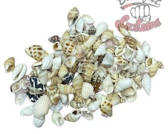 Sea shells for resin art