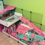 """2x4 bottom 2x2 top CC Guinea Pig Cage 14""""x14"""" Wire Grid Panel Cage with Corrugated Plastic Rabbit Hedgehog 4 Panels Long 2 Panels Wide"""