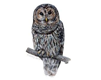 Original Barred Owl Painting