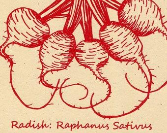 Radish Letterpress Root Veggie Greeting Card
