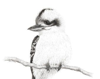 "Limited Edition Print | ""Kookaburra 3"" | Fine art print from my original artwork"