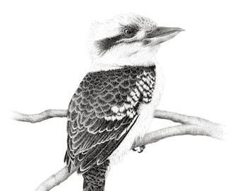 "Limited Edition Print | ""Kookaburra 1"" | Fine art print from my original artwork"