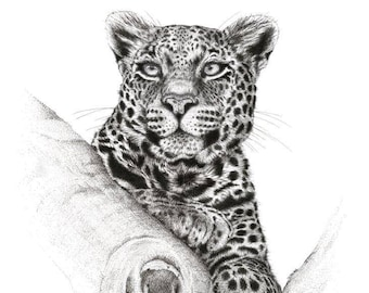 """Limited Edition Print 