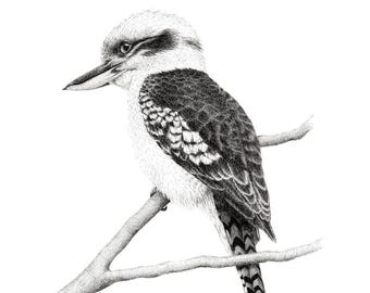 "Limited Edition Print | ""Kookaburra 2"" | Fine art print from my original artwork"