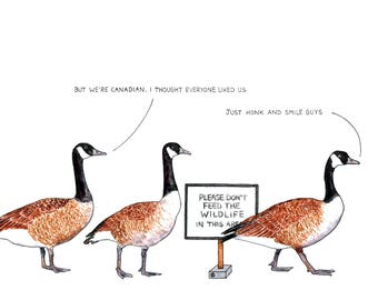 Canada Geese - card or mounted print - polite Canadian goose, honk and smile, Saltaire, 'Don't feed the wildlife', birds, ornithology