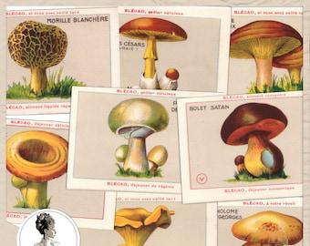 Mushroom cards, French Vintage Botanical Illustrations, Botany art pack 1