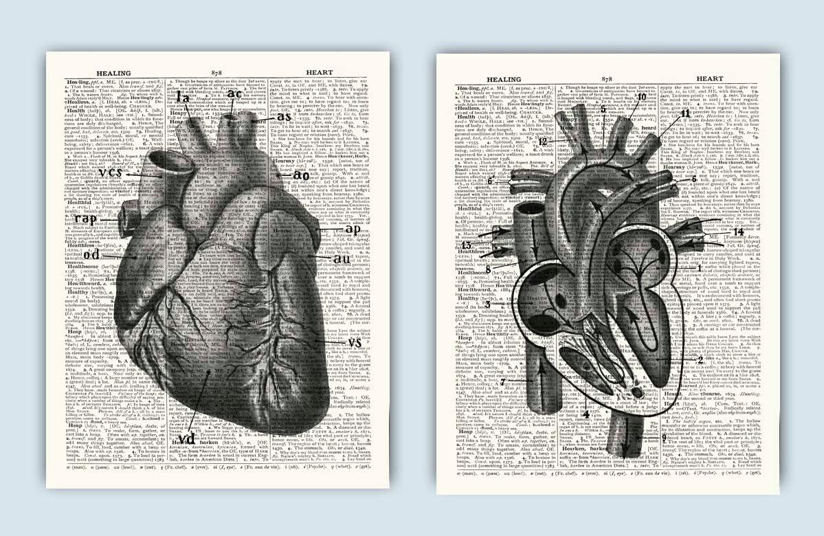 Wörterbuch drucken Herz Anatomie drucken menschliche | Etsy