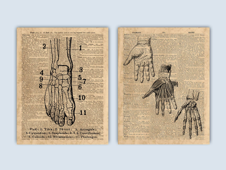Anatomie Handdruck Stellfläche Anatomie menschliche | Etsy