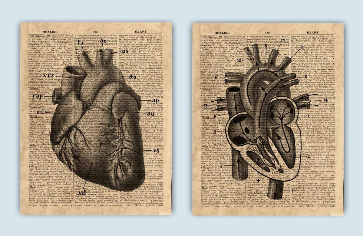 Herz-Anatomie-Druck Herz-Anatomie-Druck menschliche | Etsy