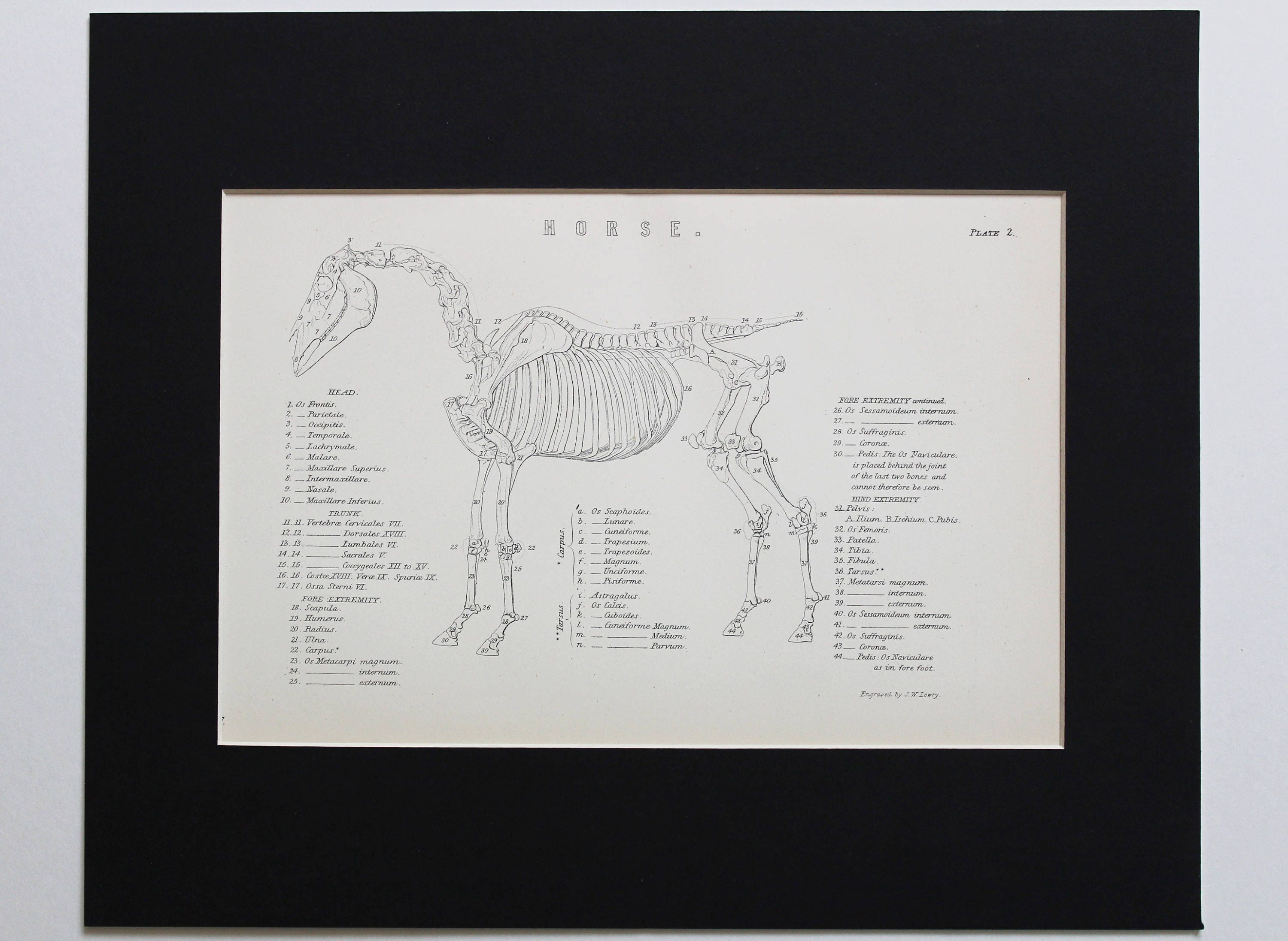 Genuine 1880 Anatomy Of A Horse Antique Plate Vintage Etsy