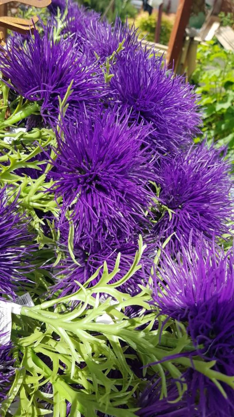 Thistle flower allium purple artificial 3 x stems ideal for birthdays anniversaries or table decorations with a Scottish lilt.