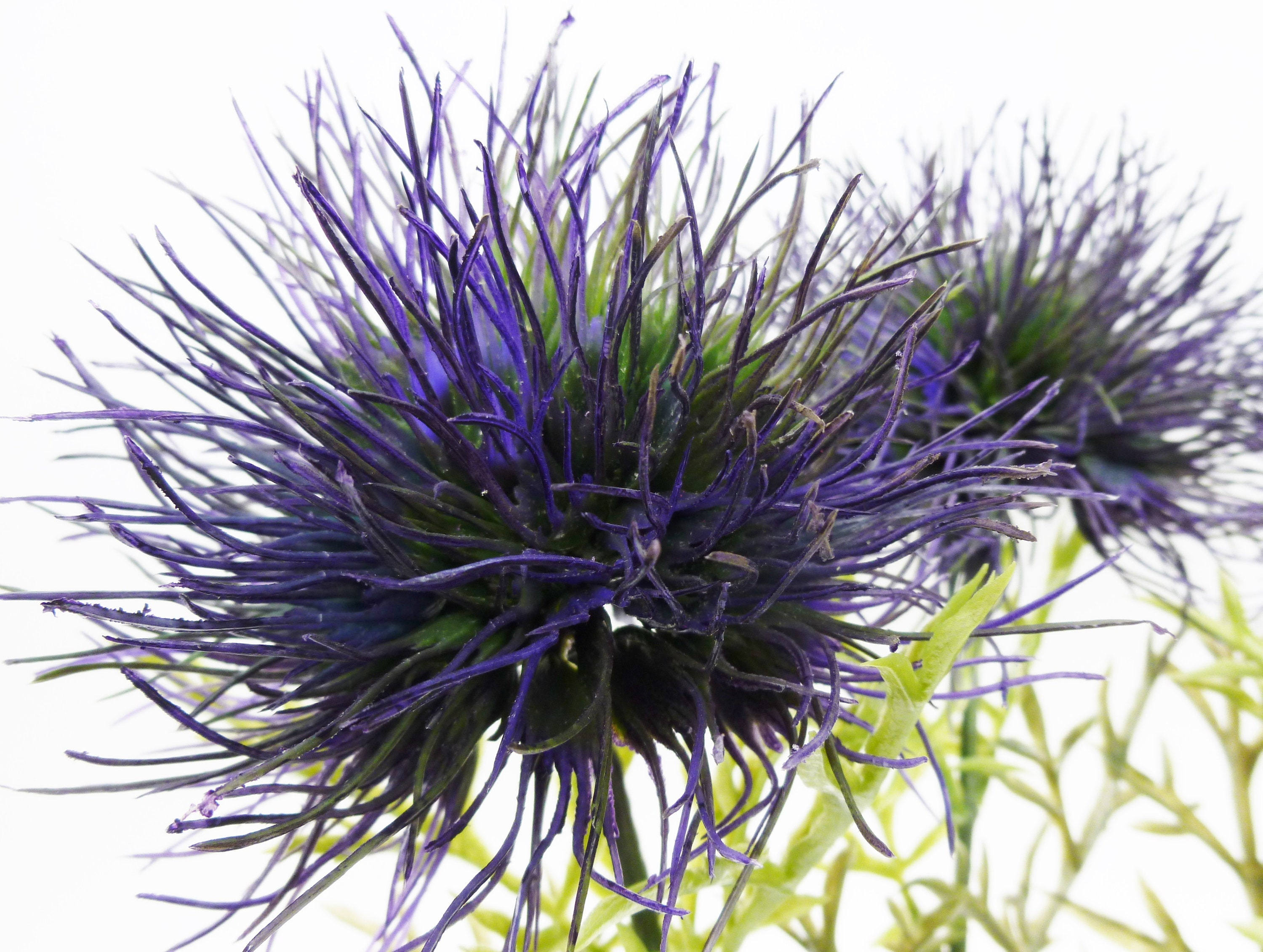 Allium Thistle Flower Blue Artificial Silk Flowers Etsy