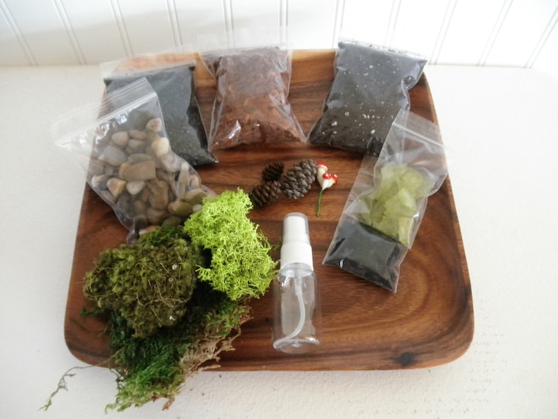 Diy Woodland Terrarium Kit Use Your Own Container Etsy