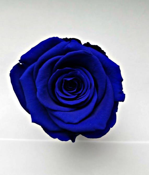 Preserved rose 6 pack, Deep blue, rose, Everlasting rose, Forever rose, wedding rose, engagement rose