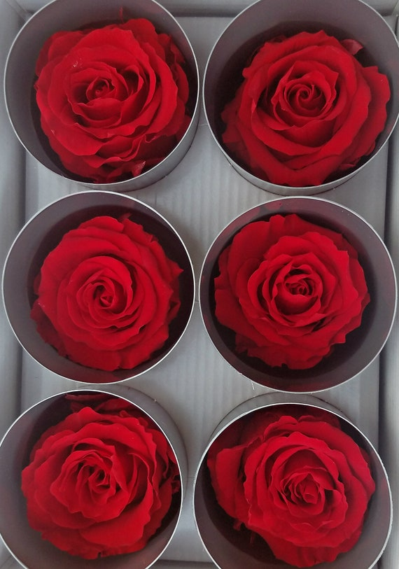 Red Ecuadorian preserved roses