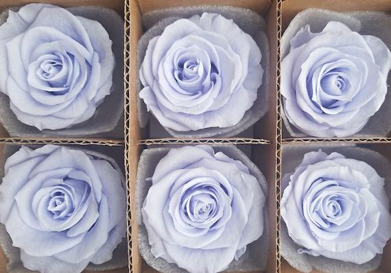 Lavender Ecuadorian preserved roses, lavender haze