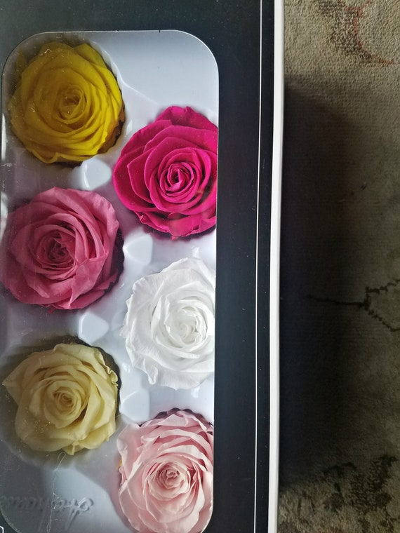 Preserved rose mix color six pack 6 pack, 22.99