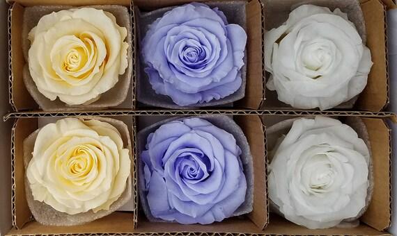 Ecuadorian preserved roses  28.99