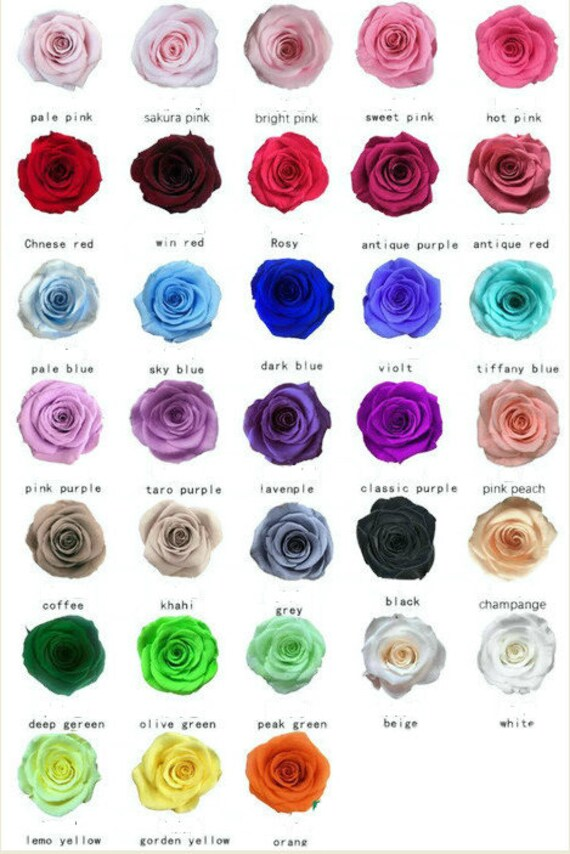 Preserved roses large 24.99 6 pack