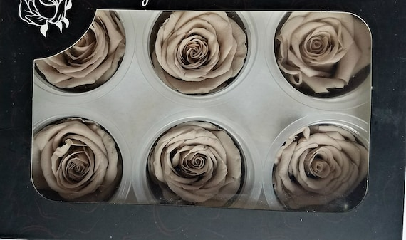 Beige preserved rose 6 pack
