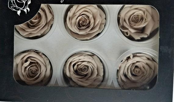 Preserved rose 6 pack, beige, rose, wholesale rose, bridal rose, wedding rose, engagement rose, cakedecor, rose sale