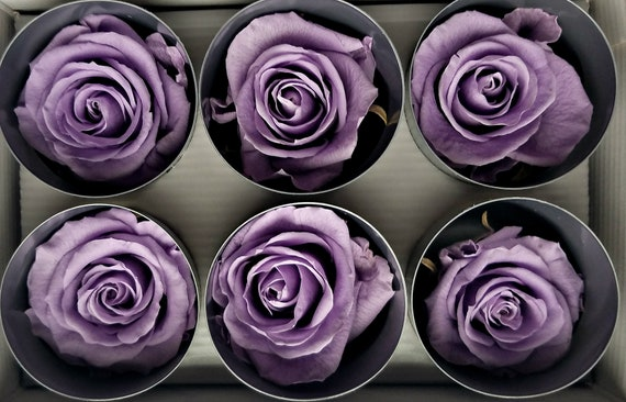 Lilac Ecuadorian preserved rose six pack