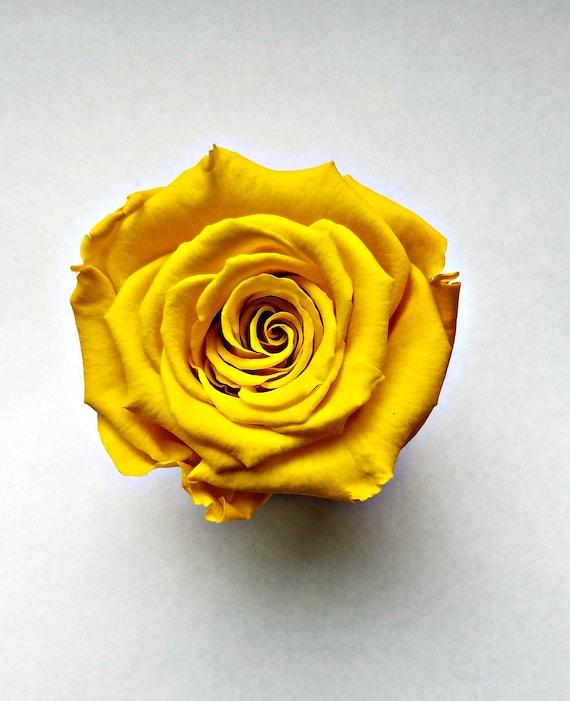 Preserved rose 6 pack, Yellow rose, Everlasting rose, Forever rose, wedding rose, engagement rose, wholesale rose, rose sale
