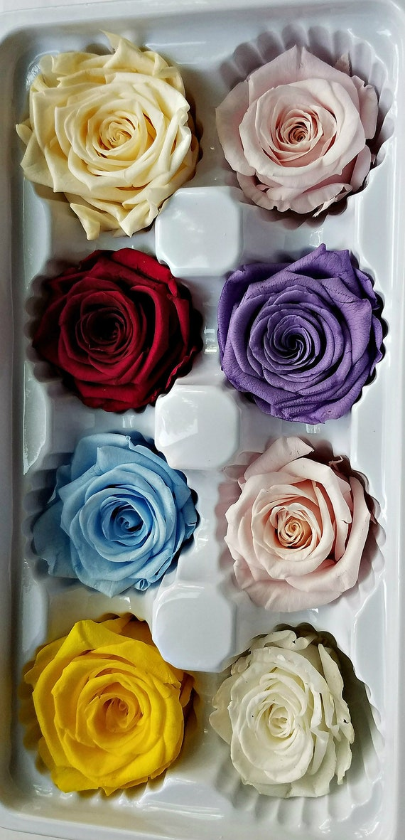 Preserved rose 8 pack, 24.99
