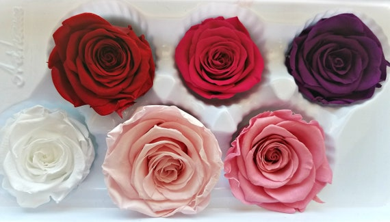 Blue preserved rose 6 pack, 22.99
