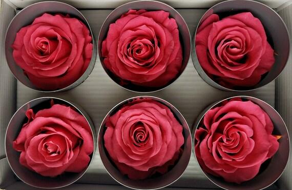 Dark Pink Ecuadorian preserved roses