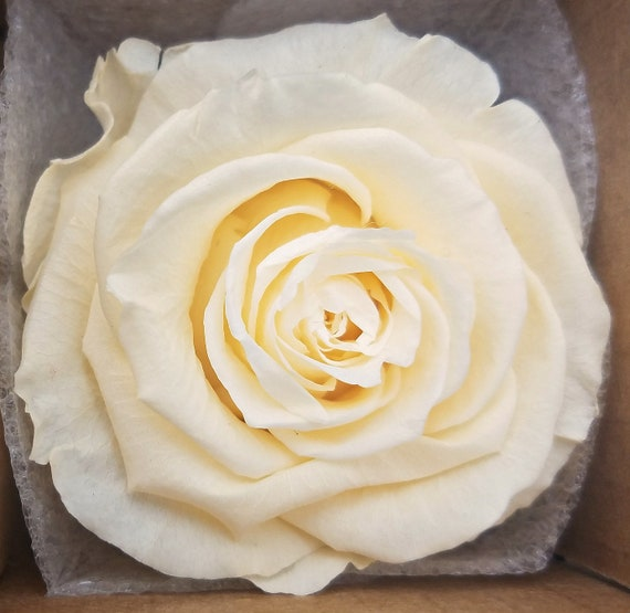 Ecuadorian preserved roses
