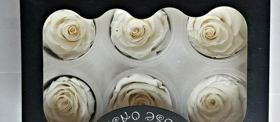 Preserved rose 6 pack, off white/ light ivory rose, , wholesale rose, wedding rose, engagement rose, ivory rose, bridal  rose