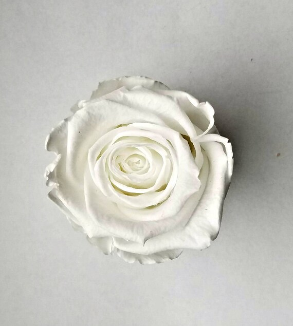 White preserved rose 6 pack, large 22.99