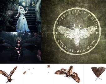Moth Magic Etsy