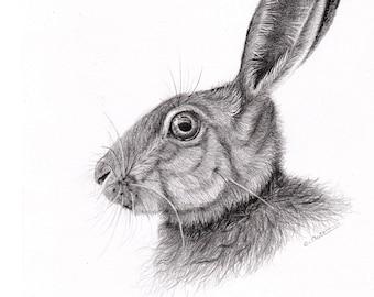 Hare drawing / Original rabbit drawing