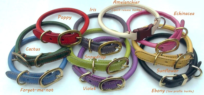 Rolled leather poodle dog collar image 0