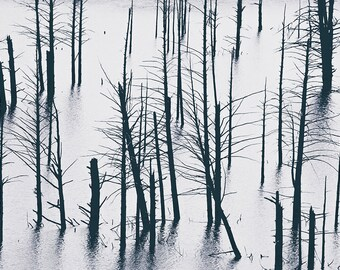 Black & White Photography - Landscape - Wall Art - Decor - Submerged Forest