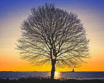 Color Photography - Landscape - Wall Art - Decor - Life Tree