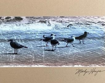 Shore Birds - Digitally enhanced